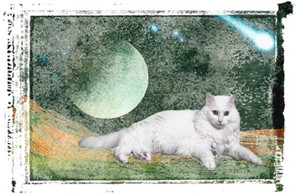Cat on Zorbis